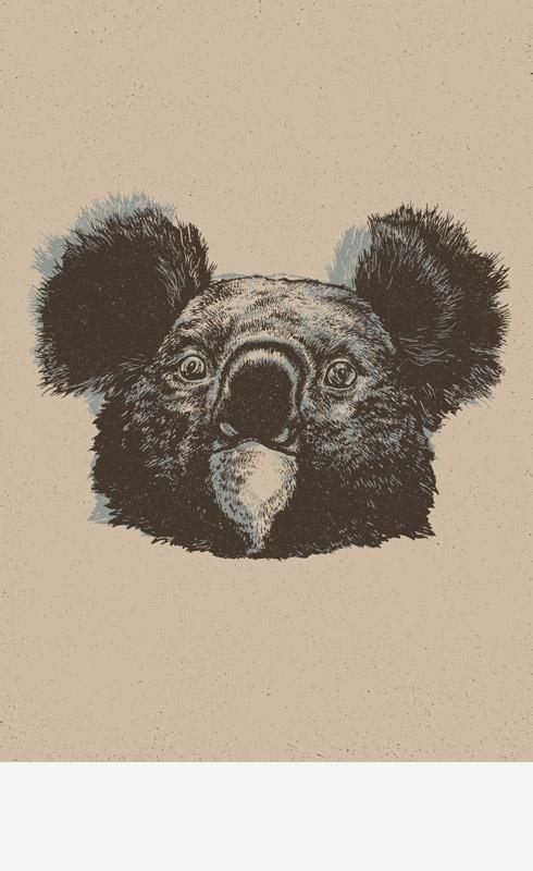 http://www.okumile.pl/files/gimgs/50_koala.jpg